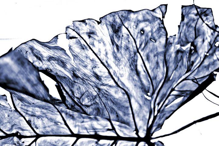 Leaf - Elena Zapassky
