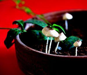 Mushrooms in plant pot - Elena Zapassky