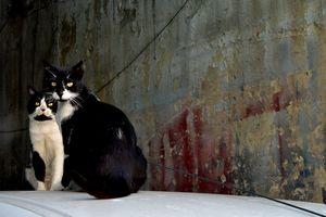 Elegant cats of Tel Aviv - Elena Zapassky