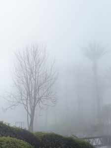 Mist morning in Jaffa