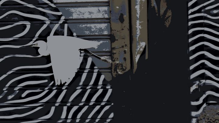 Bird in the city - Elena Zapassky