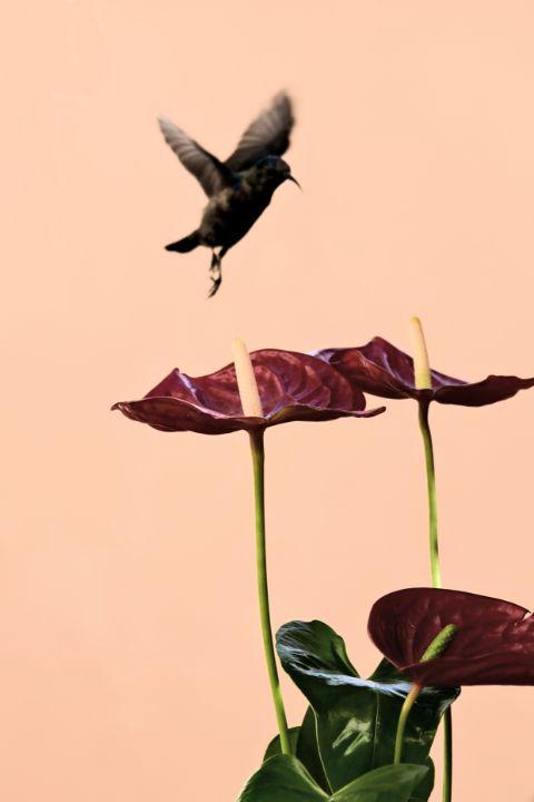 Sunbird - Elena Zapassky