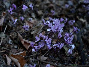 Forest violets - Elena Zapassky