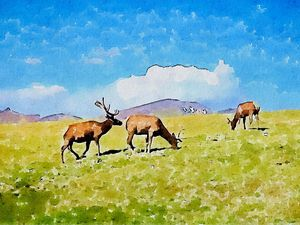 Elk Herd - Photos to Watercolor