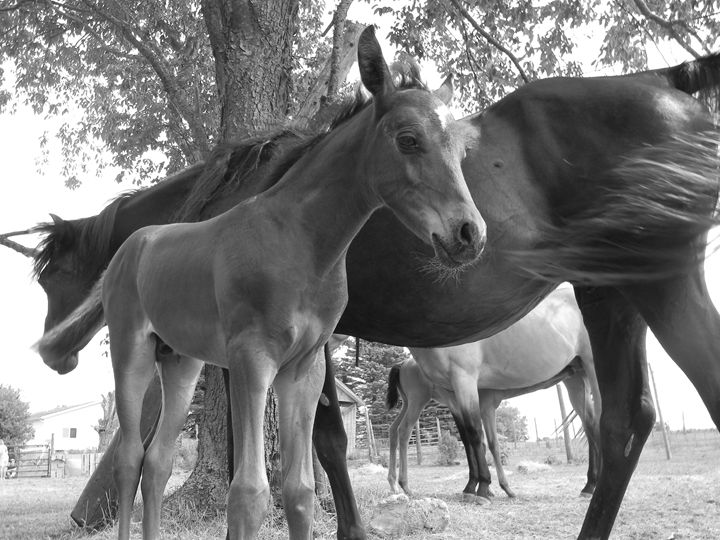 Mare and her foal - Kimberely Martin