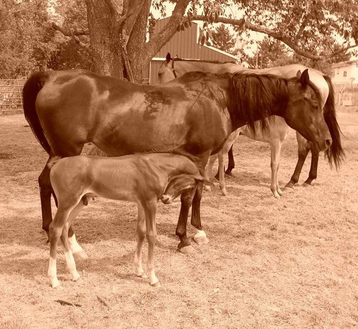 Mare and foal - Kimberely Martin