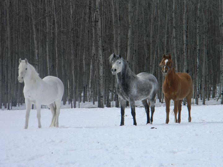 Winter Horses - Kimberely Martin