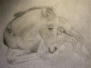 Baby Horse Drawing