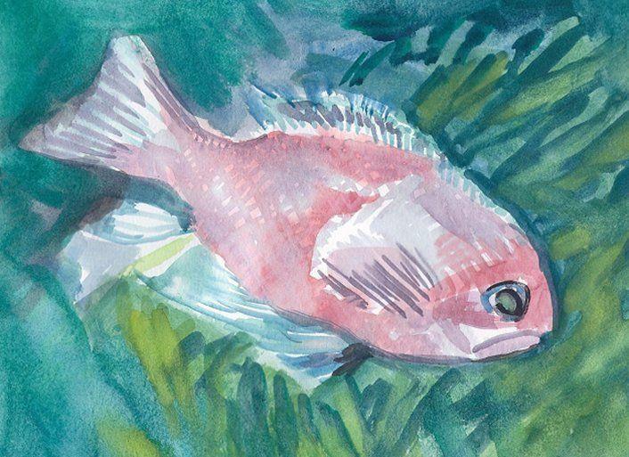 Pink Caribbean Fish - PaintSarahPaint