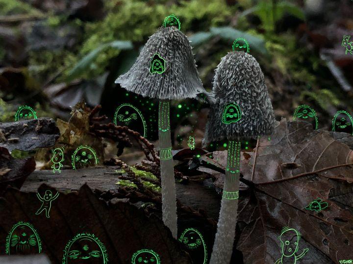 A weird forest - Joey