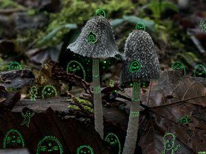 A weird forest