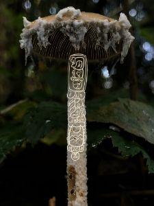 Mushrooms and glyphs