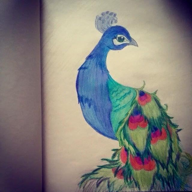 Peacock - Hannahs Creations