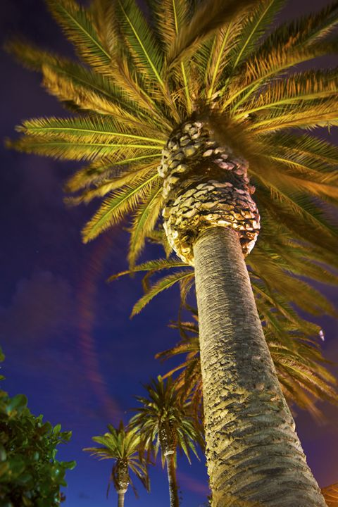 Palm Tree - Austin Okeson