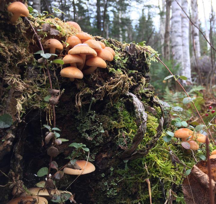 Mushrooms 3 - artbrico