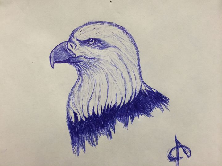 american eagle - my sketches