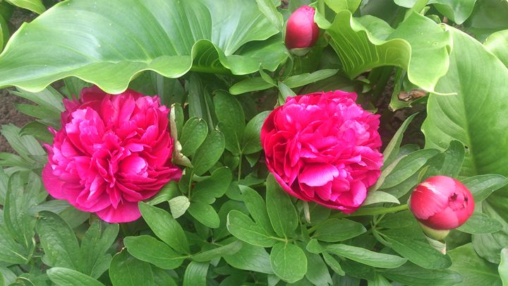Flower Duo - G3Pics