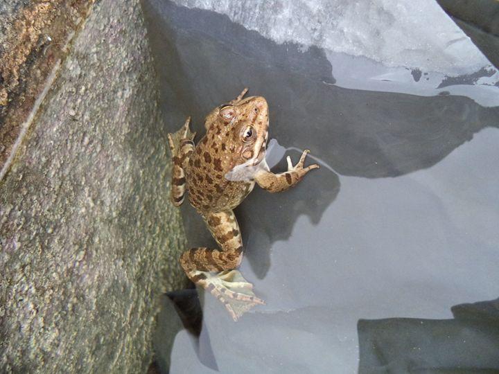 Frog 2 - Anesta Exena Photography