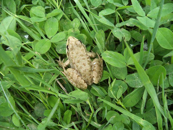 Frog 1 - Anesta Exena Photography