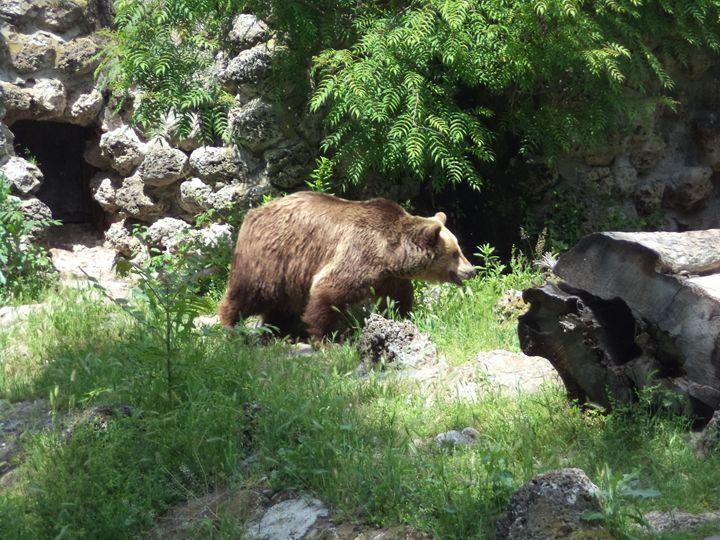 Brown Bear - Anesta Exena Photography