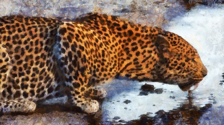 Leopard drinks water from the river - Black Morion