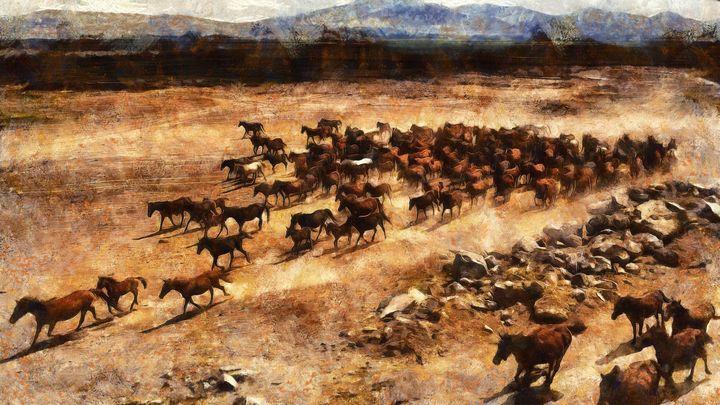 A herd of wild running horses - Black Morion