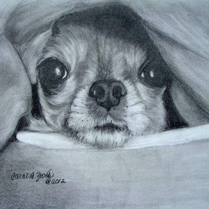 Chihuahua Commission - Carol Zeock Artwork