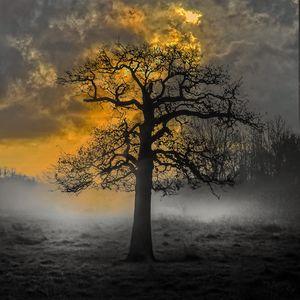 Haunted Tree Sunrise