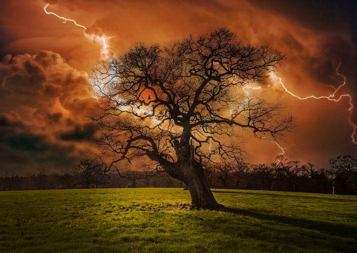 Hells Bells _ Thunderstruck Tree - Dave Williams