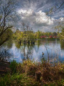 Cloud Reflections at Longmoor Lake