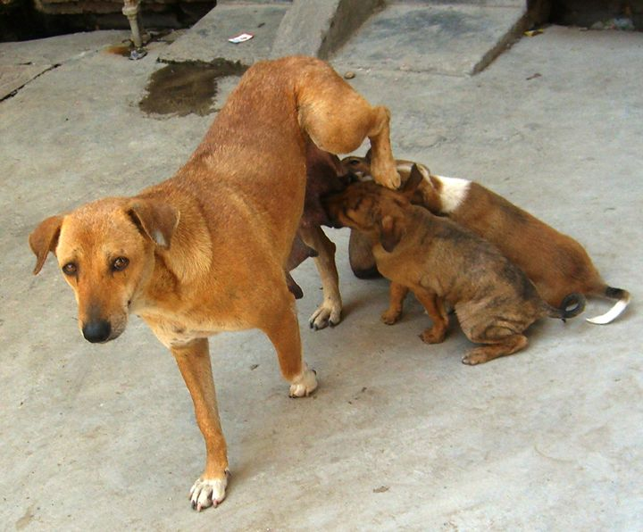 Mother's Work is Never Done – Dog - EndLocalHunger