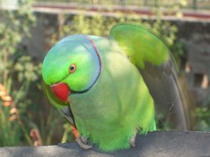 Parrot: Eyeing The Meal