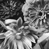 Zinnia gerbera floral arrangement