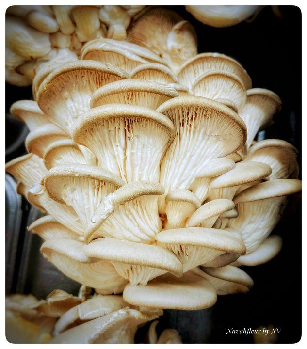 mycelium - Navahfleur