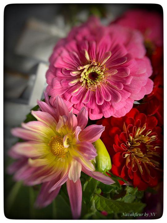 Zinnia flowers - Navahfleur
