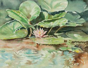 Waterlily - Suzanne Edmonds