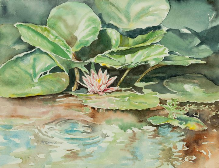 Waterlily - Suzanne Edmonds