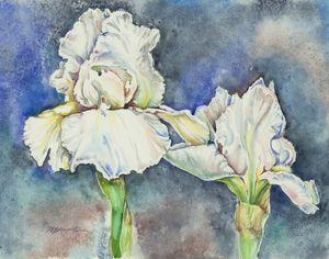 White Irises - Suzanne Edmonds