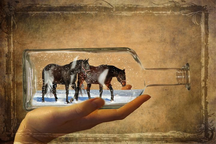 Horses In A Bottle - DC Photography