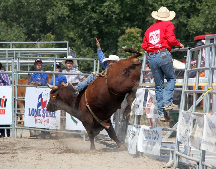 Bull Riding - DC Photography
