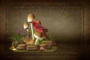 The Cardinal - DC Photography