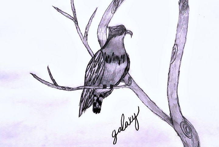 Osprey on tree - BirdsOfGalaxy