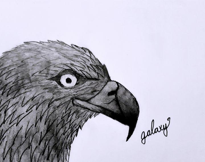 Bald Eagle - BirdsOfGalaxy