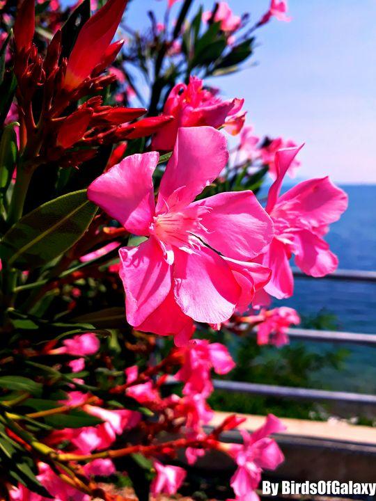 Pink Flower By BirdsOfGalaxy - BirdsOfGalaxy