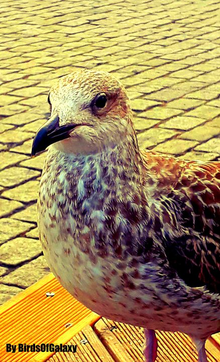 Ocean Birds - BirdsOfGalaxy