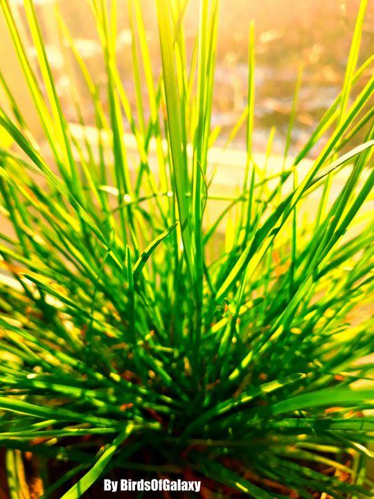Fine Grass - BirdsOfGalaxy