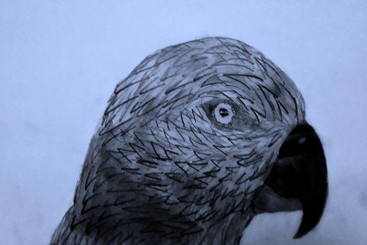 Parrot 2 - BirdsOfGalaxy