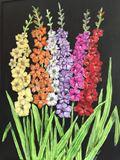 Colored Gladioli