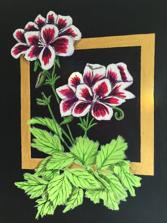Pelargoniums - Art by Barbara Saul