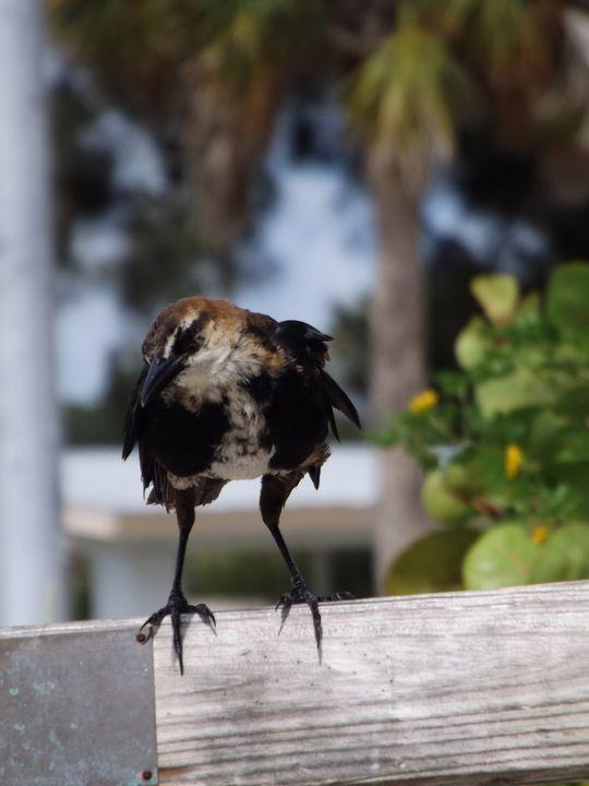 Mr. Bird -  Heatherback59